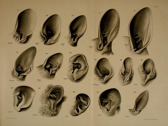 ears 1912