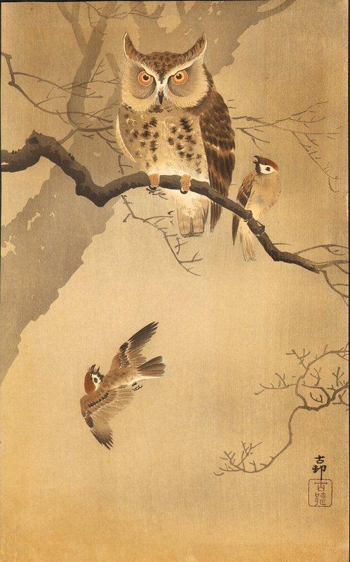 koson-owl