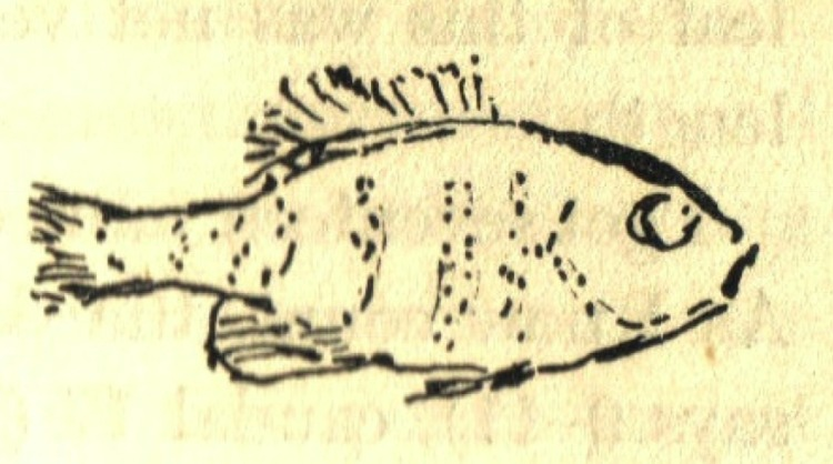 HDT Fish.jpg