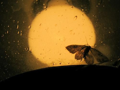 moth_light_500